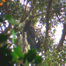 Bama, der Gorillamann - Abenteuer in Kamerun