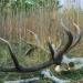 Metamorphosen - Die Wildnis kehrt zurück