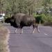Bilder zur Sendung: Beruf Tierfilmer