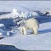 Arktis - Die Zeitbombe tickt
