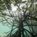 Abenteuer Erde - Das Great Barrier Reef