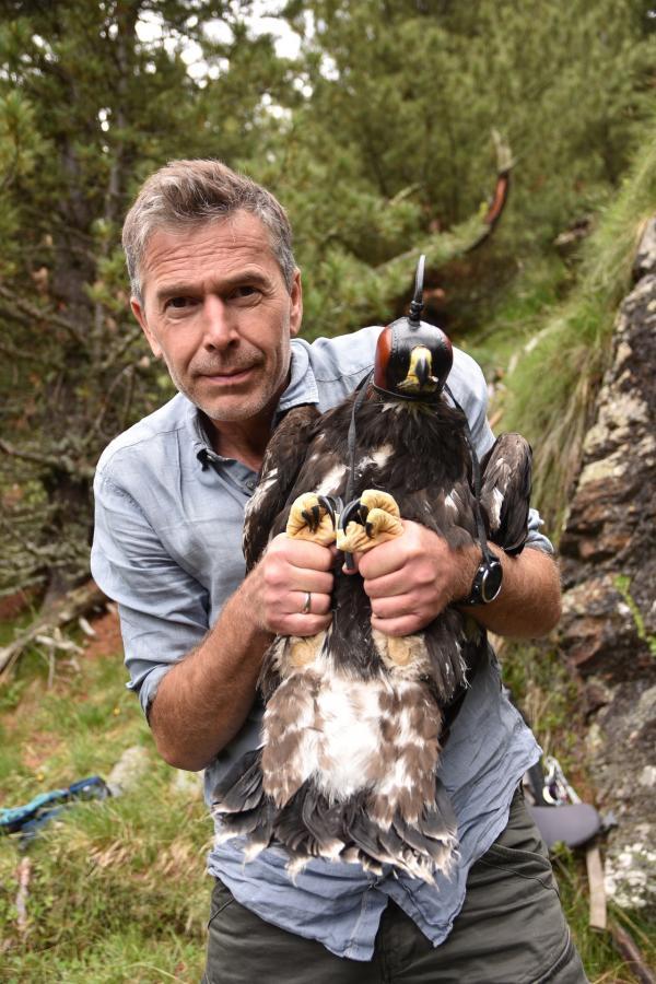 Bild 1 von 1: Adler im Visier: Dirk Steffens hält einen jungen Steinadler, damit das Tier mit einem GPS-Sender ausgestattet werden kann. Die Daten seiner Flugrouten sollen helfen, den Adler zu schützen.