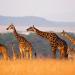 Ein Tag in der Wildnis - Die Savanne