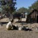 Bilder zur Sendung: Auf Expeditionsreise nach Madagaskar