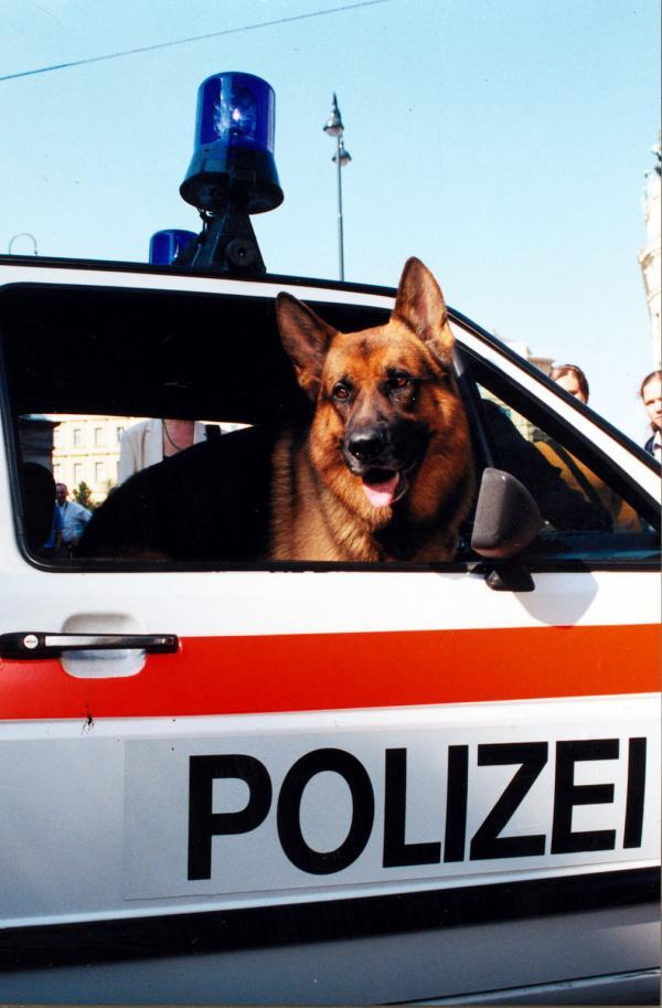 Bild 1 von 12: Rex im Polizeiauto