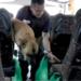 Bilder zur Sendung: Die Hunde-Cops - Mit vier Pfoten auf Streife
