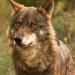 Bilder zur Sendung: Spaniens wilder Norden - Wolfsschluchten