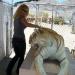 Bilder zur Sendung: Extrem-Schmuggler - Wildtiere