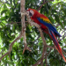 Costa Rica - Mittelamerikas grüne Schatzkammer