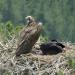 Naturparadies: Türkei Von Braunbären, Zieseln und Flamingos