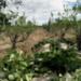 Bilder zur Sendung: Kräuterwelten in Südamerika