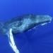Hawaii - Paradies der Wale und Vulkane