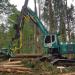 Männer und Maschinen - Baumfäller im Großformat