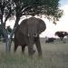 Tödliches Afrika - Tierische Angreifer