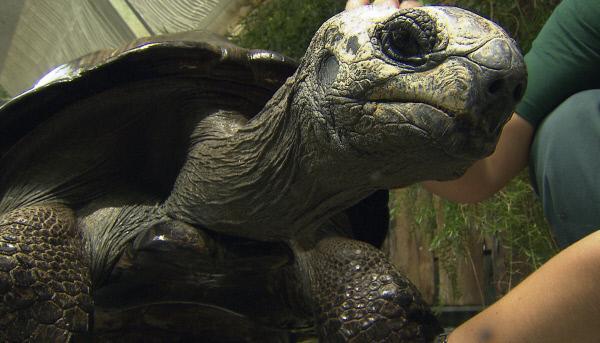 Bild 1 von 2: Schildkröte Schildi lässt sich verwöhnen.