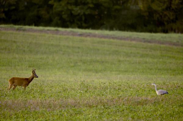 Bild 1 von 5: Wem gehören Reh, Hirsch, Gams, Wildschwein, Hase, Fuchs, Luchs, Bär oder Wolf? Sie haben keine Besitzer, sie sind Teil der Natur. Aber genau genommen gibt es keine Natur mehr in Europa.