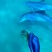 Zum Leiden verdammt - Das Geschäft mit den Belugawalen