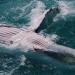 Wo die Wale zur Welt kommen