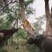Safari-Paparazzi: Wildlife pur (4)