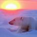 Bilder zur Sendung: Die Spur des Bären