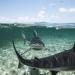 Bilder zur Sendung: Haie, gejagte Jäger