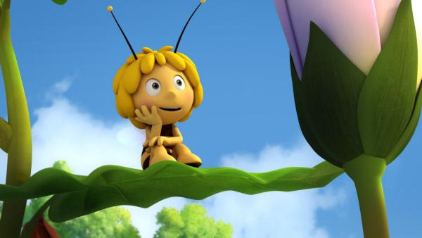 Bild 1 von 7: Die Biene Maja