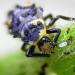 Bilder zur Sendung: Insekten, Superhelden auf sechs Beinen
