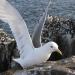 Die Nordsee - Von Schottland zu den Halligen
