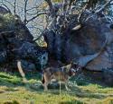 Wilde Überlebenskünstler - Wie Tiere kommunizieren