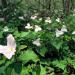 Wilde Appalachen - Die Berge der Cherokee
