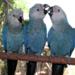 Bilder zur Sendung: Papageien, Palmen & Co.