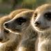 Die sozialen Netzwerke der Tiere