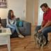 Bilder zur Sendung: Der Hundeprofi