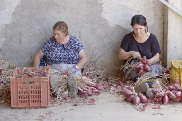 Bild 1 von 8: Rote Zwiebelzöpfe aus Tropea
