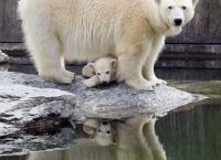 Eisbär, Affe & Co.