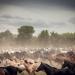 Archaic Festivals - Gaucho-Rodeo in Argentinien