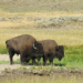 Geheimnis Yellowstone