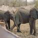Simbabwe - Trophäenjagd für den Tierschutz?