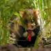 Bilder zur Sendung: Das Kornfeld - Dschungel f�r einen Sommer