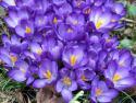 Die Macht der Jahreszeiten: Frühling & Sommer