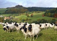 Entdeckungen im Fuldaer Land
