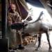 Bilder zur Sendung: Mongolei - Bei den Rentiernomaden