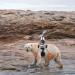 Sommer der Eisbären
