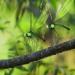 Die Winzlinge in freier Wildbahn
