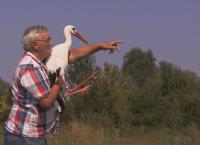 Der alte Mann und der Storch