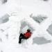 Alltagsflucht: Finnland - Lappland im Winter