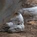Lautlose Killer - Schlangen auf der Jagd