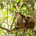 Bilder zur Sendung: Wildes Sri Lanka - Waldwelt (2/3)