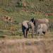 Tiertransporte XXL - Elefanten