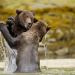Bilder zur Sendung: Fight Club der Tiere - Die härtesten Kämpfe